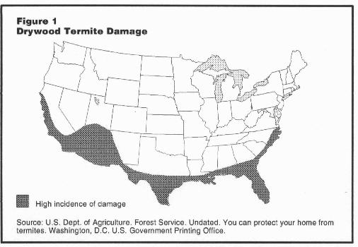 Drywood Termite Damage in the United States