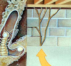 How termites enter home