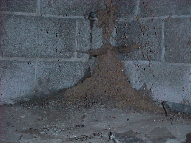 Signs Of Termite Infestation Termite Infestation Pictures